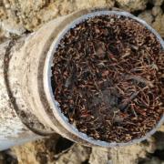 Intrusion de racines dans une canalisation