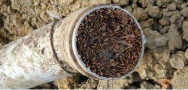 Canalisation bouchee par des racines