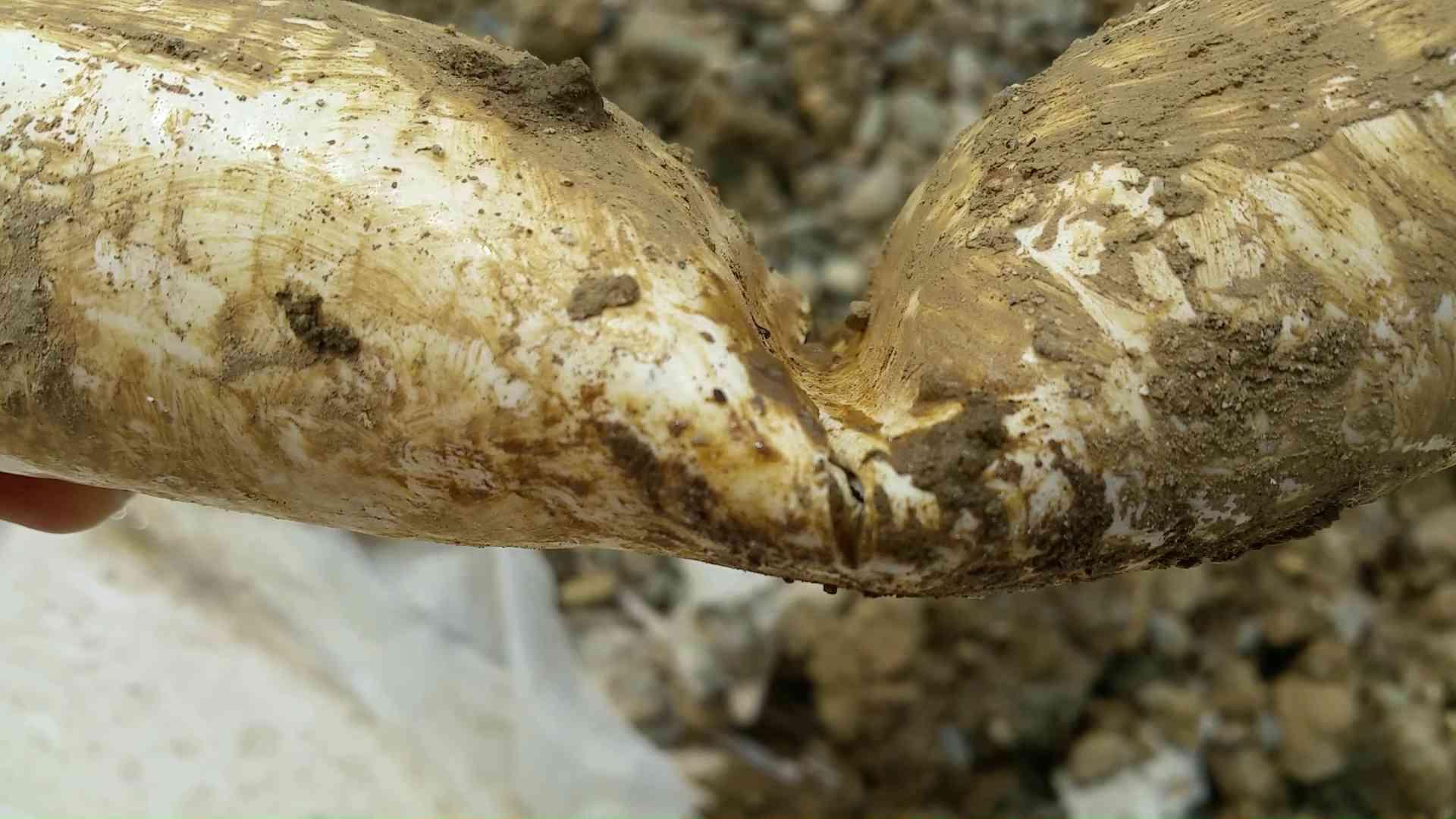 Canalisation obstruée par des racines