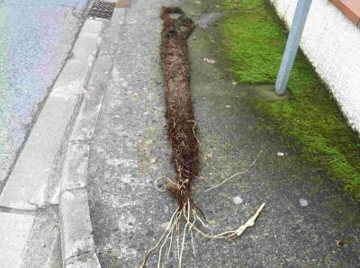 Comment d truire des racines dans les canalisations - Comment utiliser un furet ...